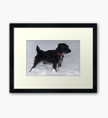 Bailey - The Patterdale Terrier Framed Print