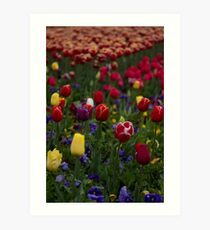 Sea of Tulips Art Print
