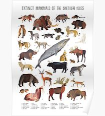 Image of: Dodo Bird Extinct Animals Of The British Isles Poster Etsy Extinct Animals Drawing Posters Redbubble