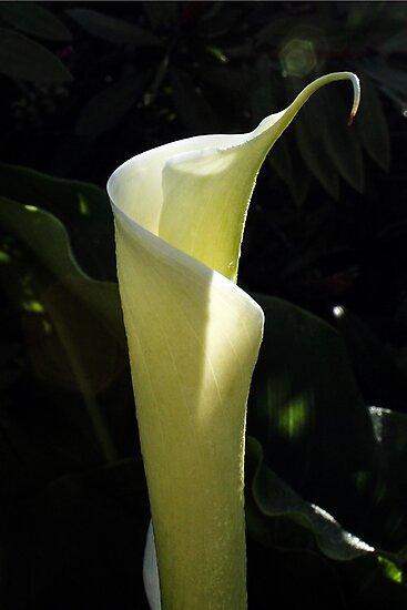 Lily by Deanna Gardam