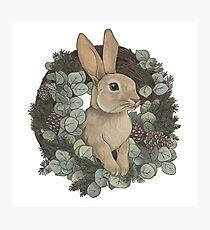 Winter Rabbit Photographic Print