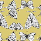 Moths: Canary Yellow by Ben Geiger