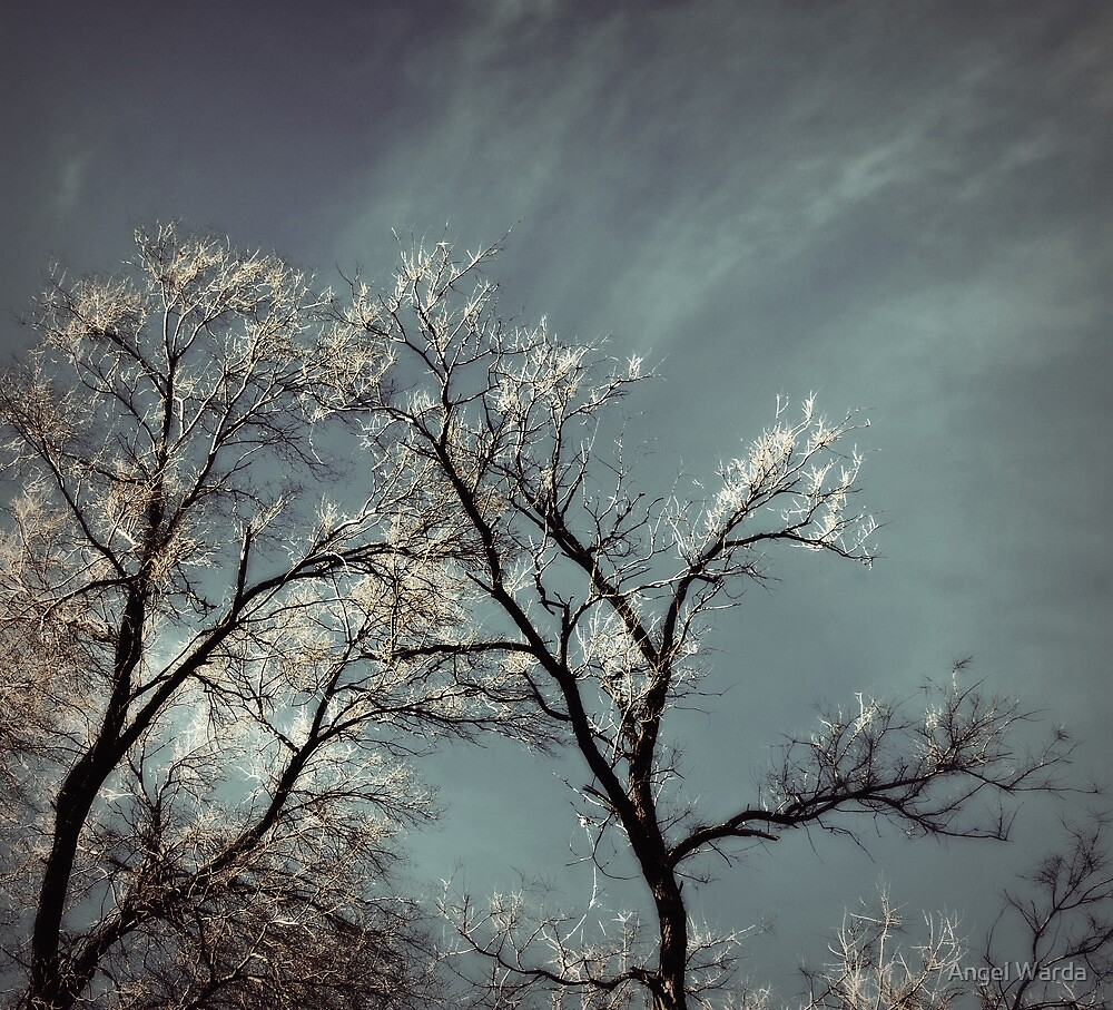 glowing branches by Angel Warda