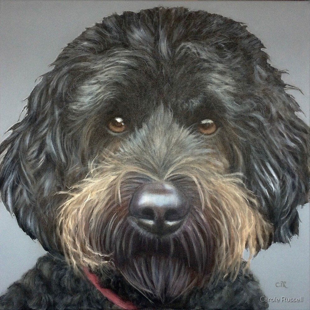 Cockapoo- commission  by Carole Russell