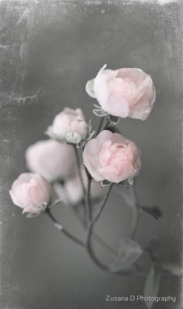 rose work by Zuzana D Photography