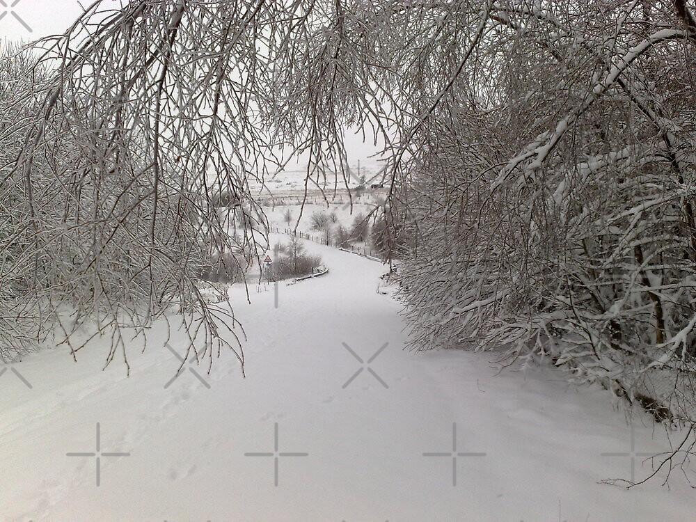 a cold walk - Garnyrerw by sjbaldwin