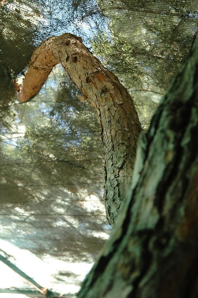 Tree by fonsecanuno