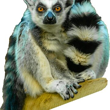 Beautiful Ring Tailed Lemur by Dalyn