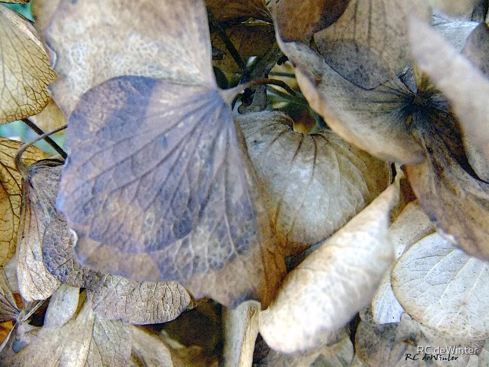 Tissue Paper Petals by RC deWinter