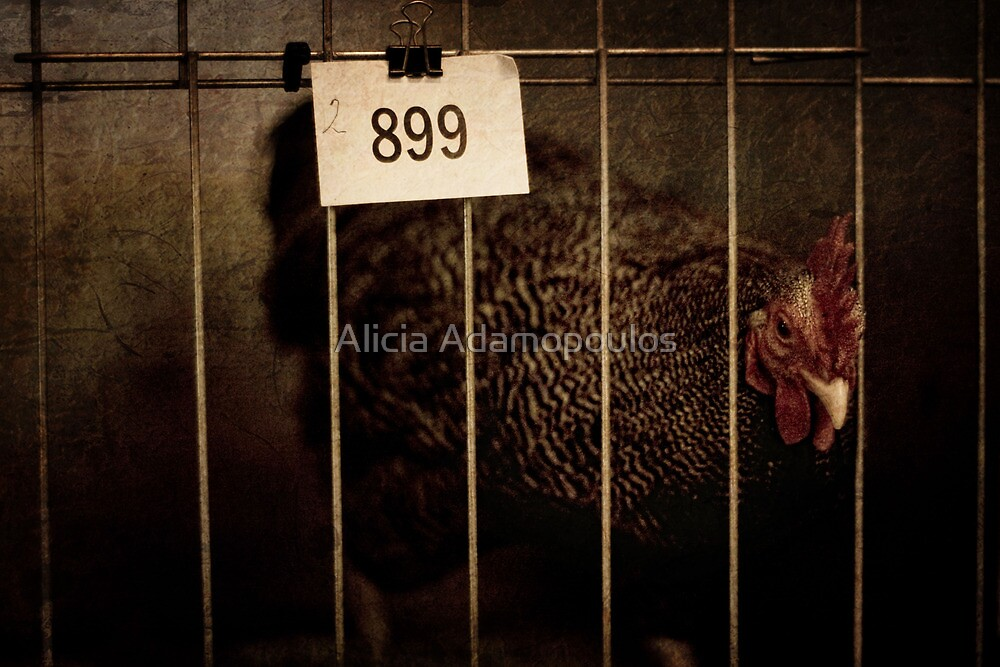 Hen at the Show by Alicia Adamopoulos
