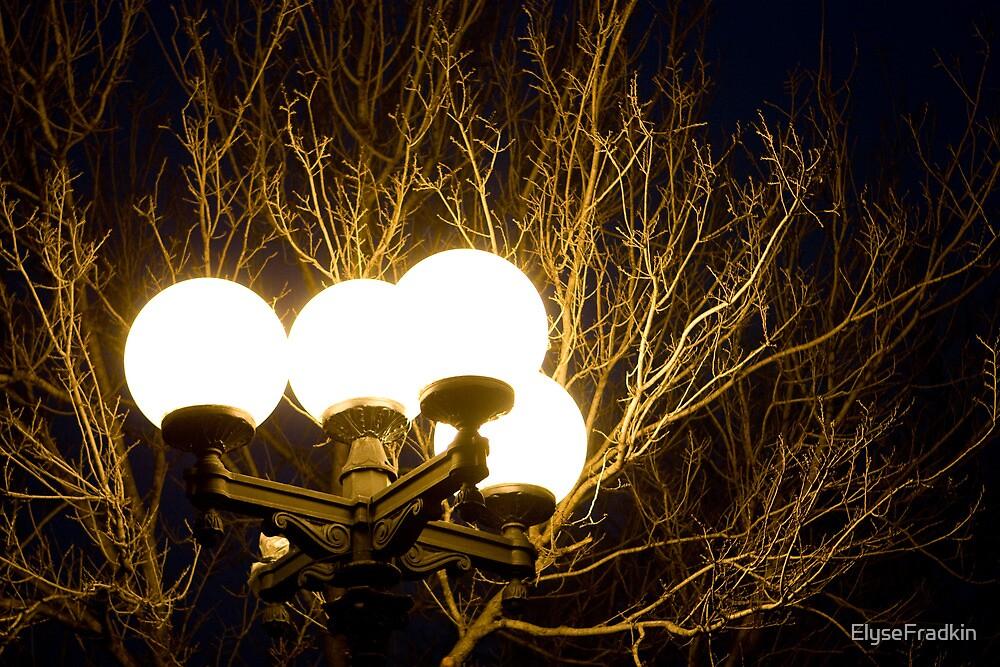 Enlightened Branches by ElyseFradkin