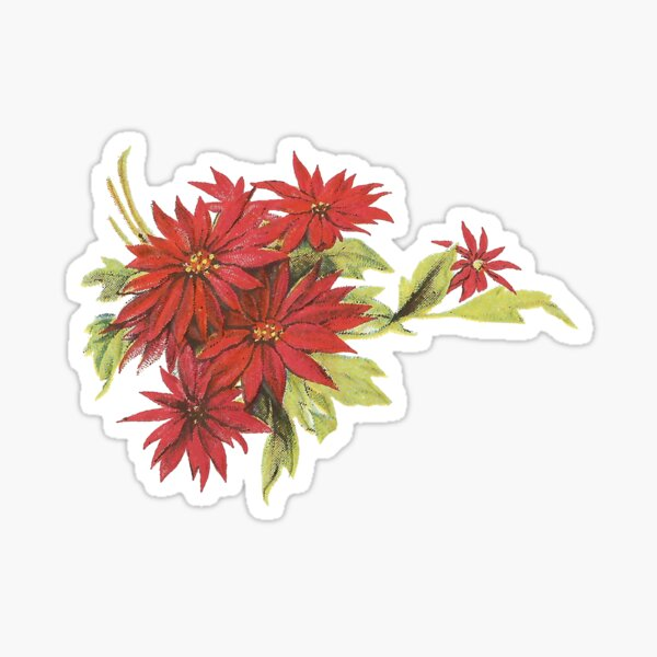 Vintage Poinsettia for Christmas Glossy Sticker