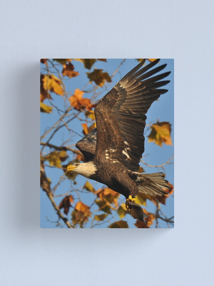 Alternate view of Eagle With Fish, My first Capture Canvas Print