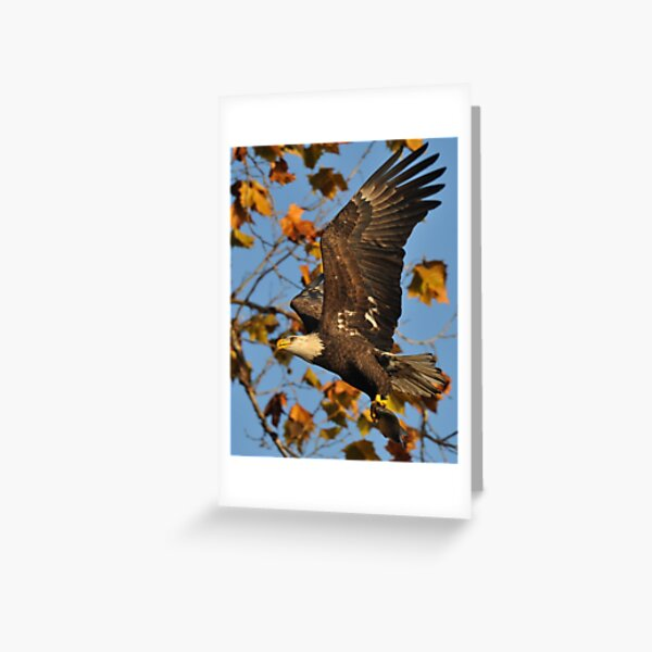 Eagle With Fish, My first Capture Greeting Card