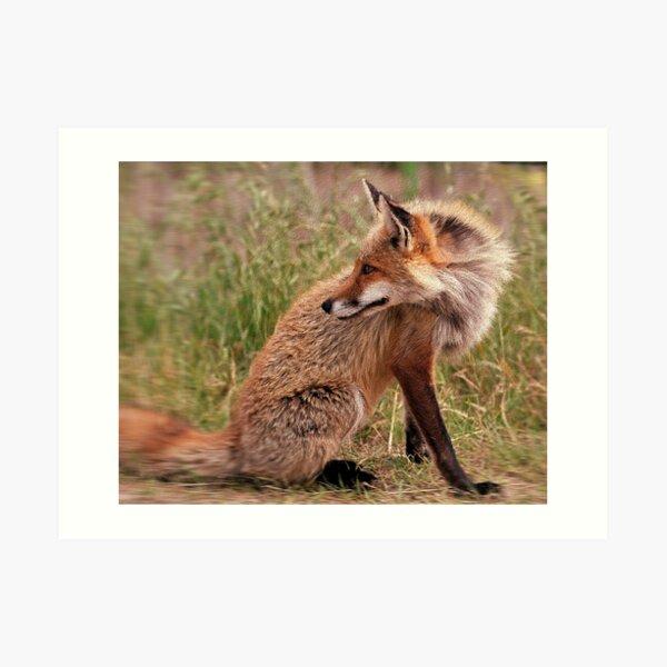 Red Fox Mom  Art Print