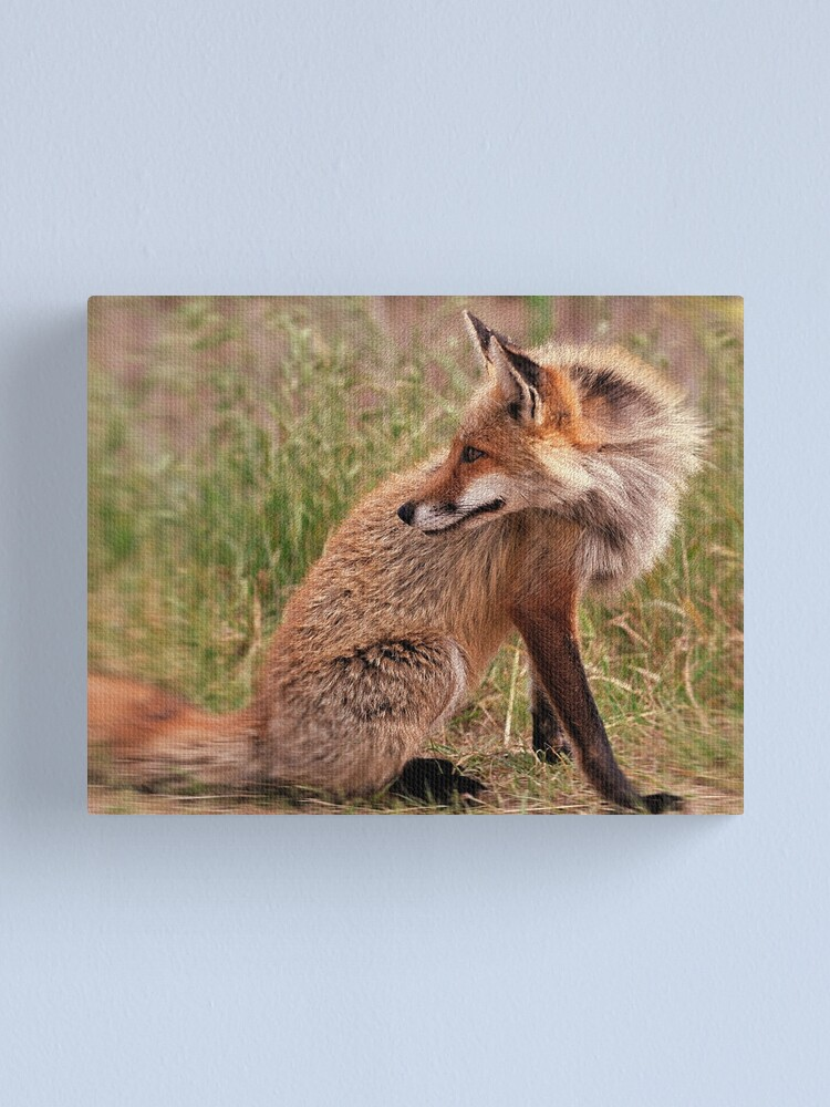 Alternate view of Red Fox Mom  Canvas Print