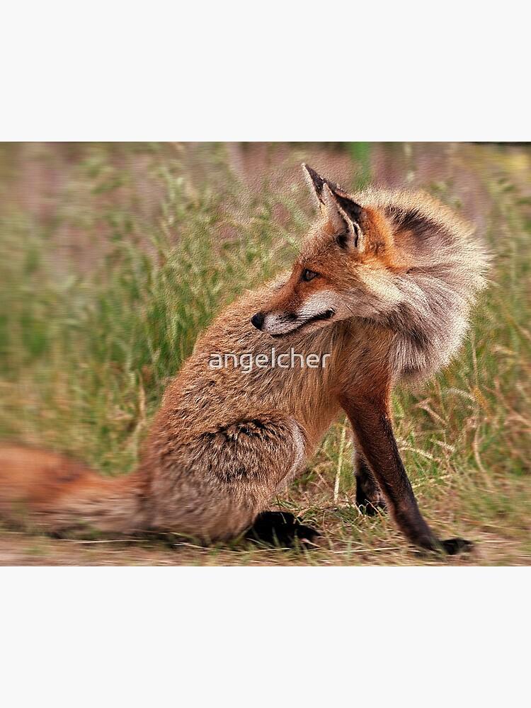 Red Fox Mom  by angelcher