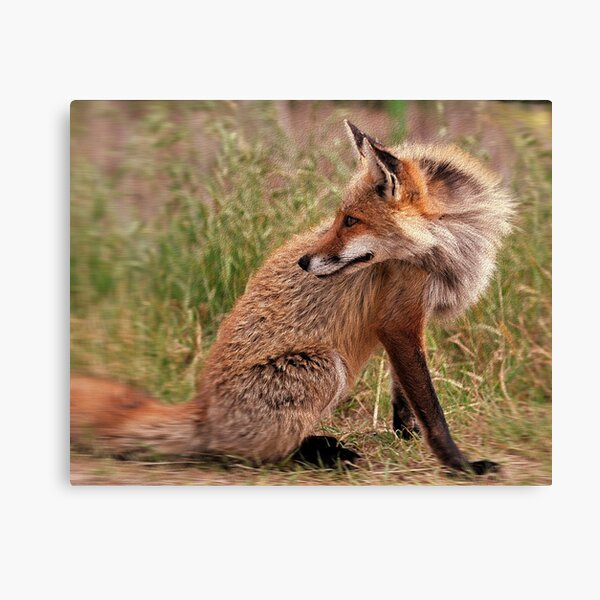 Red Fox Mom  Canvas Print