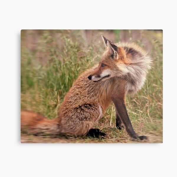 Red Fox Mom  Metal Print