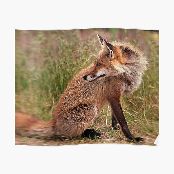 Red Fox Mom  Poster