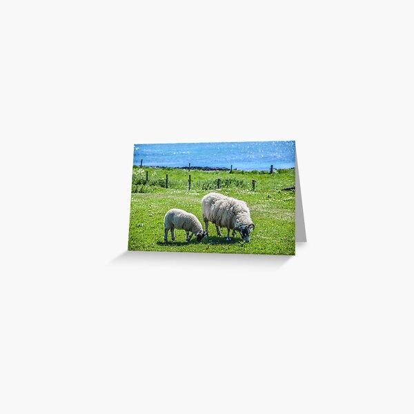 Sheep, Iona, Scotland Greeting Card