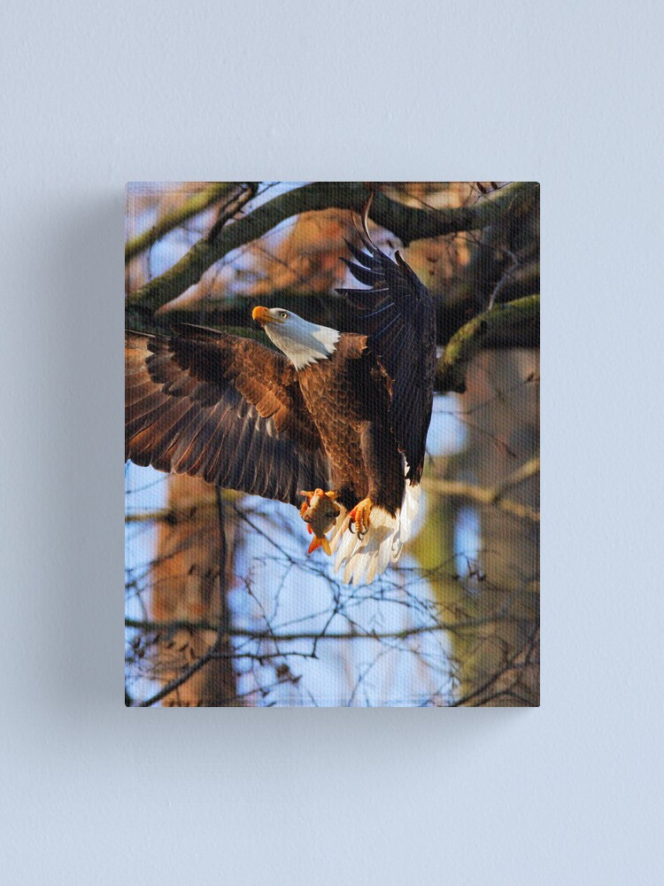 Alternate view of Eagle in flight with Fish Canvas Print