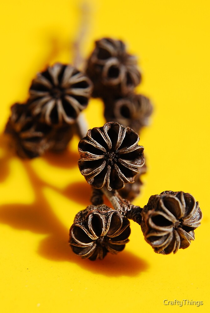 Seed Pods on yellow by CraftyThings