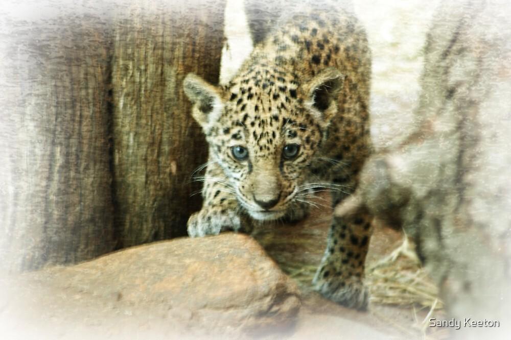 Jaguar cub by Sandy Keeton