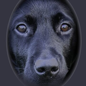 Face of a Black Labrador dog by Dalyn