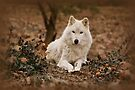 Wolf in Winter by Sandy Keeton