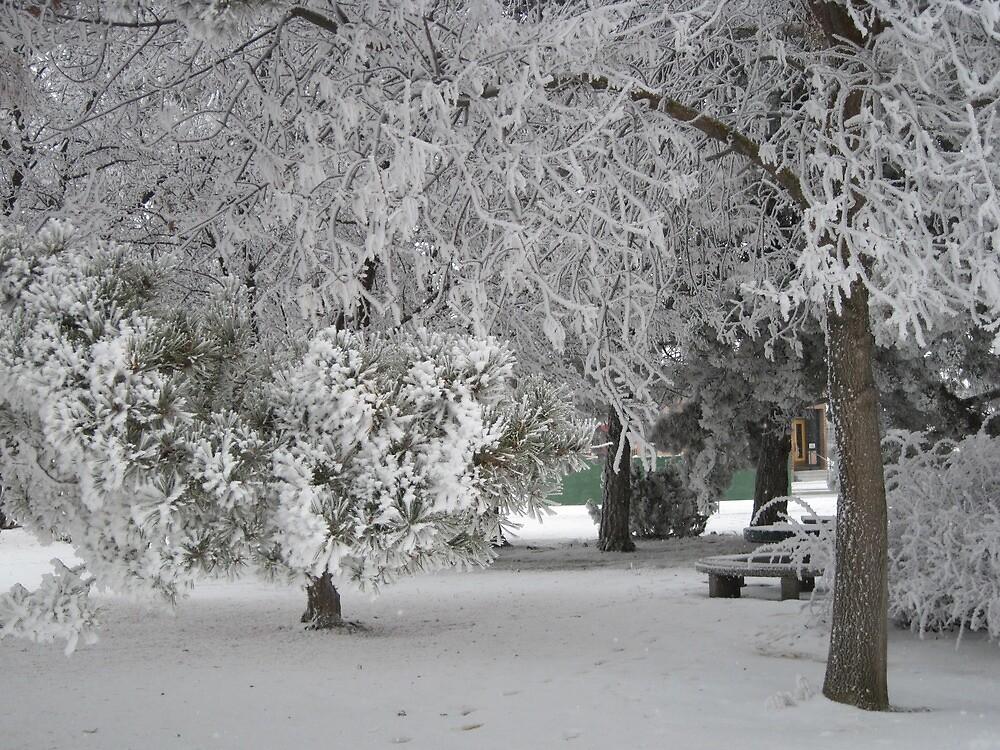 Bluestem Park in Winter - Mansfield, Washington by tompaine