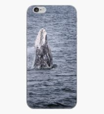 Gray Whale Breaching iPhone Case