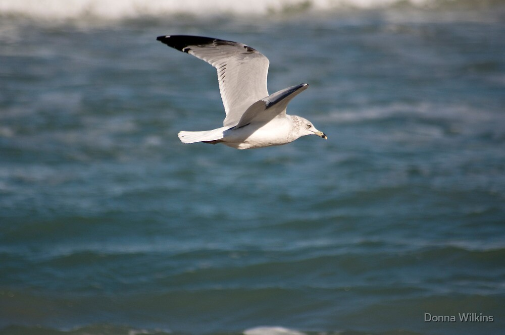 Seagull Fly By by Donna Wilkins