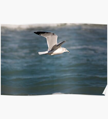 Seagull Fly By Poster