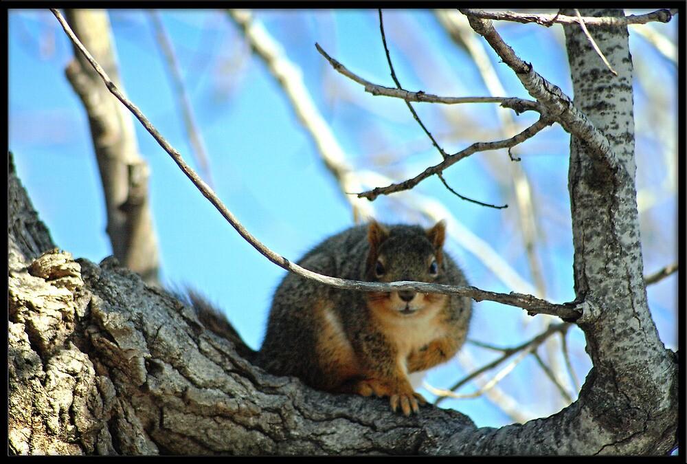Seeking Squirrel by Rdestruction