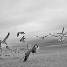 Running with Seagulls by deahna