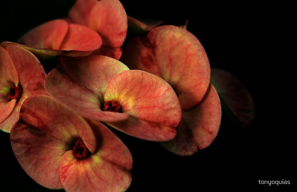 Flower Art by tonyoquias