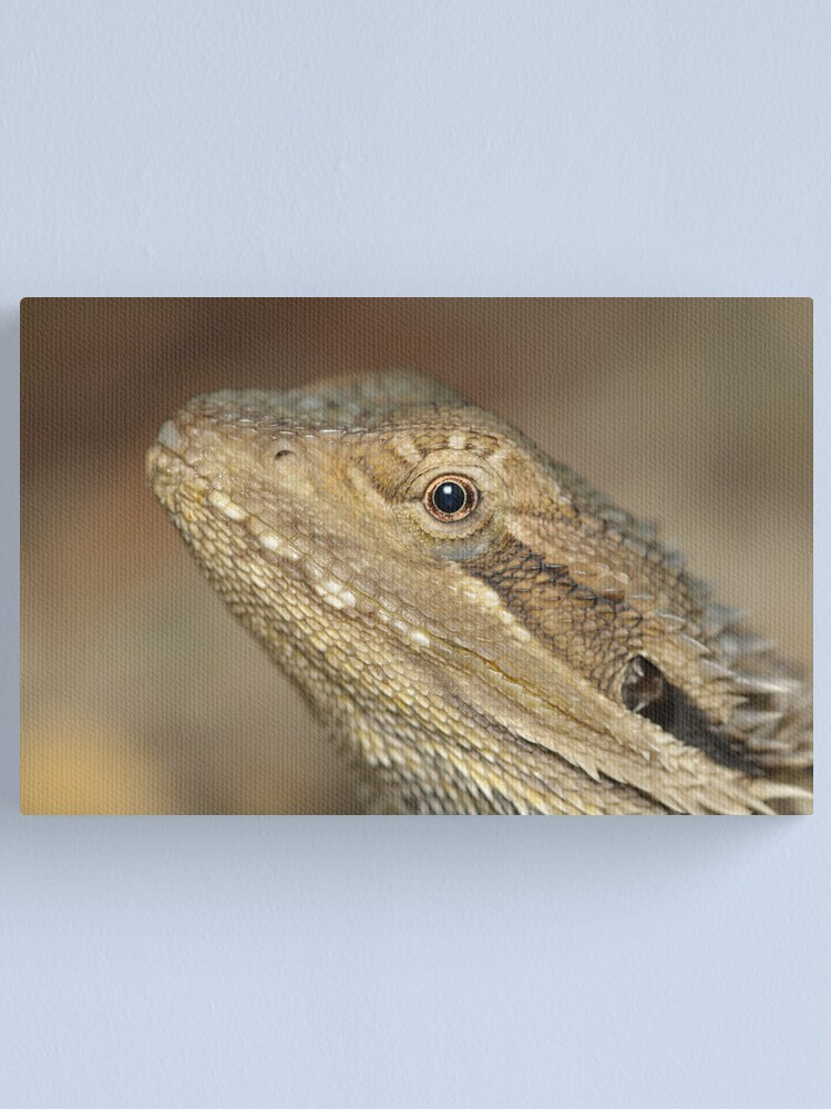 Alternate view of Eastern Bearded Dragon Canvas Print