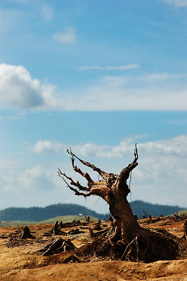 Deforestation by tonyoquias