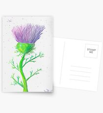 Thistle Time Again Postcards
