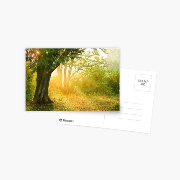 The Golden Light Postcard