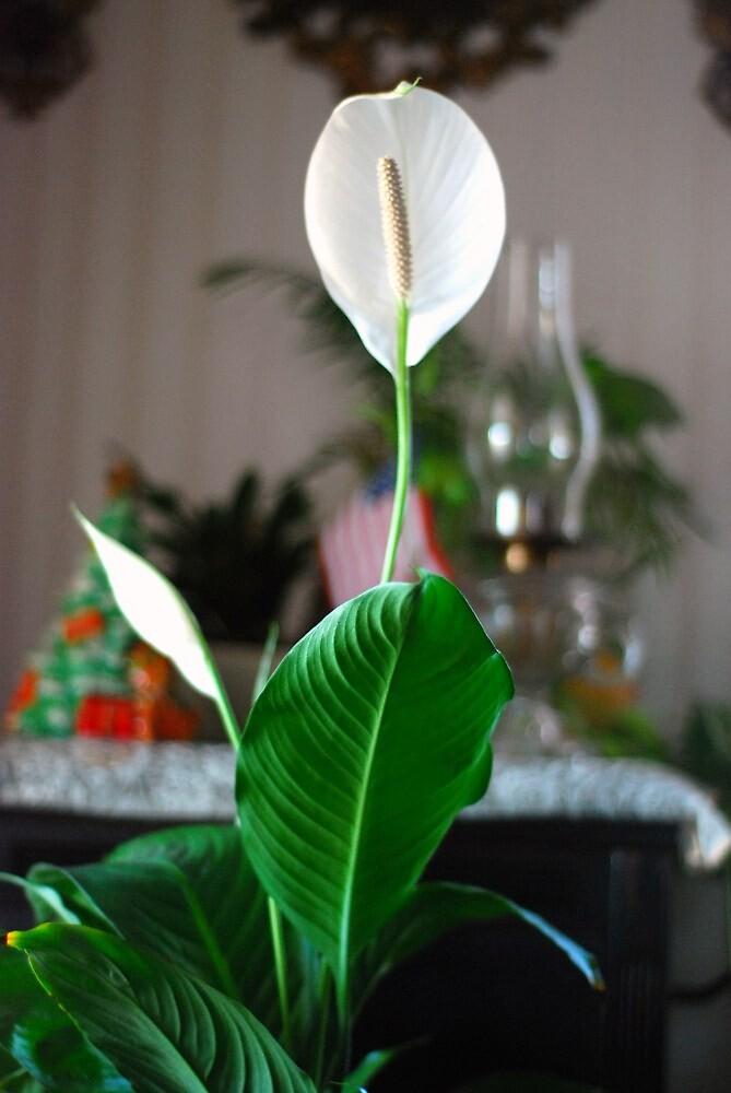 White Flower Bloom by Geezer94