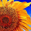 Backlit Sunflower by sesillie