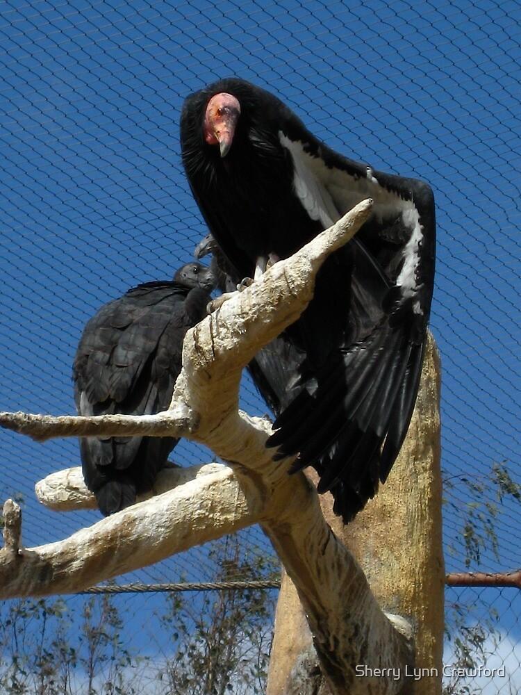 California Condor by Sherry Lynn Crawford