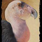 California Condor by Susan Fox
