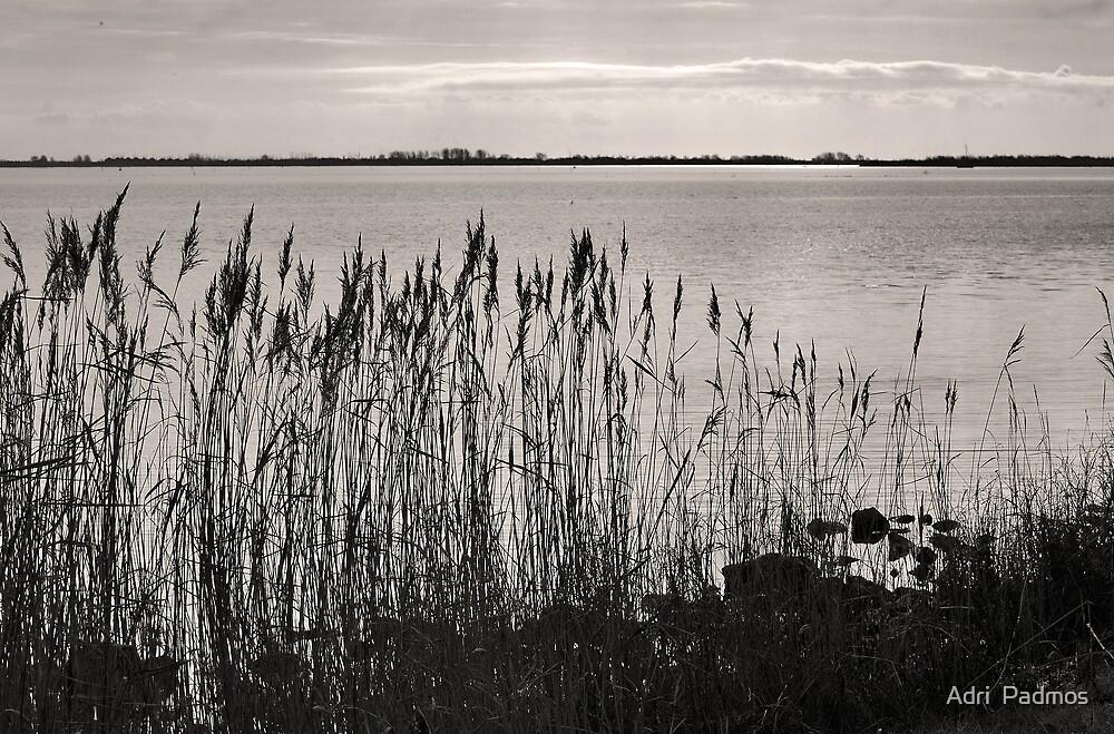 Lake Grevelingen in B&W by Adri  Padmos