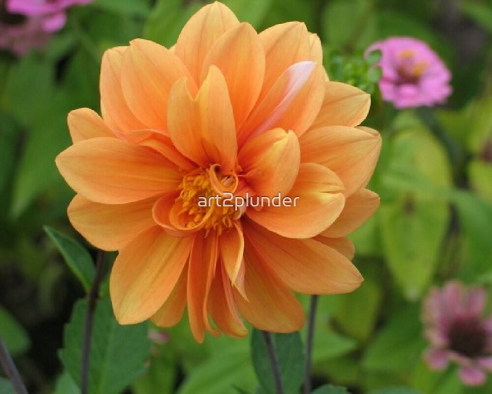 Orange Dahlia by art2plunder
