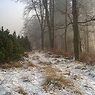 Walk in the Snow by Ann Garrett