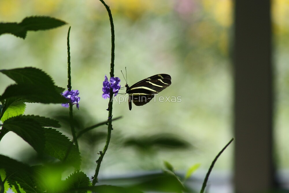 Butterfly in The Pavilion by April-in-Texas
