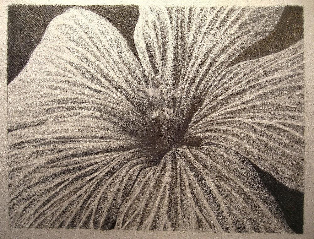 Silverpoint Flower by Meggo85